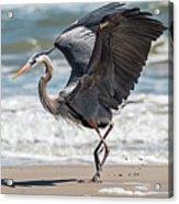 Dancing Heron Triptych Acrylic Print