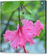 Dancing Lady Pink Hibiscus Acrylic Print