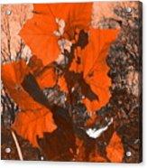 Dancing Leaves Acrylic Print