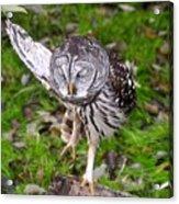 Dancing Owl Acrylic Print