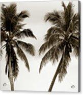 Dancing Palms Acrylic Print