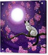 Dancing Pink Petals Acrylic Print by Laura Iverson