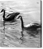 Dancing Reflections Acrylic Print by David Vincenzi