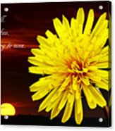 Dandelion Against Sunset With Inspirational Text Acrylic Print