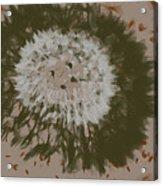 Dandelion Emu 3 Acrylic Print