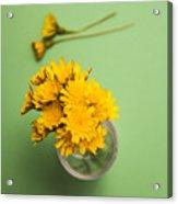 Dandelion Flower Clippings Acrylic Print
