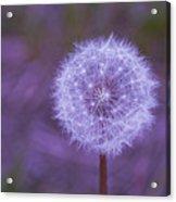 Dandelion Geometry Acrylic Print