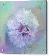 Dandelion In Pastel Acrylic Print