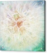 Dandelion In Winter Acrylic Print