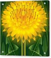 Dandelion Lion's Tooth Print Acrylic Print
