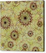 Dandelion Nosegay Acrylic Print