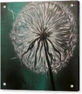 Dandelion Phatansie Acrylic Print