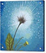 Dandy Dandelion Acrylic Print