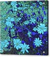 Dandy Digital Daisies In Blue Acrylic Print