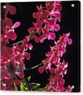 Danrobium Orchids Used To Make Lais Acrylic Print