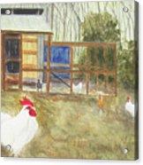 Dan's Chickens Acrylic Print