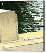 Danube River Swan Acrylic Print