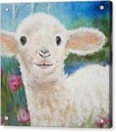 Daphne Star's Ears.   Flying Lamb Productions  Acrylic Print