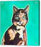 Daphne The Calico Cat Acrylic Print