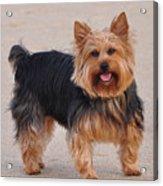 Dapper Dog Acrylic Print