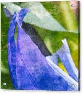 Dappled Petals Acrylic Print