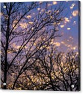 Dappled Sunset-1547 Acrylic Print