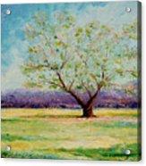 Dapples Apple Tree II Acrylic Print