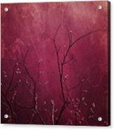 Daring Pink Acrylic Print