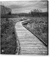 Dark Appalachian Trail Acrylic Print