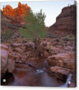 Dark Canyon Creek Acrylic Print
