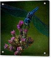 Dark Dragonfly Acrylic Print