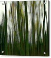 Dark Forest 3 Acrylic Print