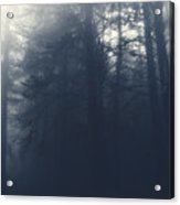Dark Forest Acrylic Print