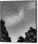 Dark Forest Night Light Acrylic Print