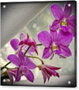 Dark Pink Orchids All In A Row Acrylic Print by Eva Thomas