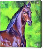 Dark Red Bay Horse Acrylic Print
