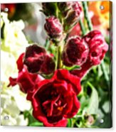 Dark Red Fancy Snapdragon Acrylic Print