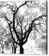 Dark Roots Acrylic Print
