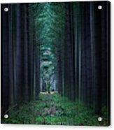 Dark Side Of Forest Acrylic Print