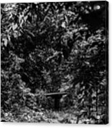 Dark Summer Woods Acrylic Print