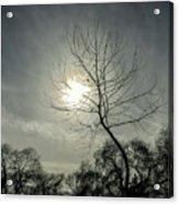 Dark Sunshine Acrylic Print