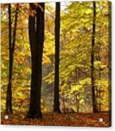 Dark Trunks Bright Leaves Acrylic Print