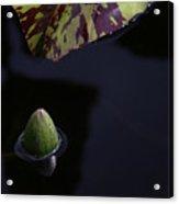 Dark Water Acrylic Print