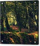 Dark Woods Acrylic Print