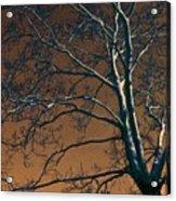 Dark Woods II Acrylic Print