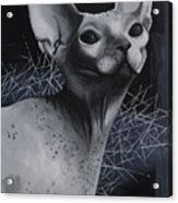 Darkness Cat Acrylic Print