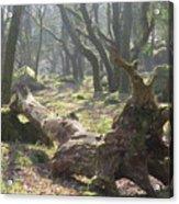 Dartmoor Woods Acrylic Print
