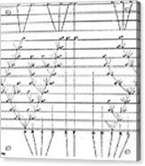 Darwins Scheme For Evolution Of Species Acrylic Print