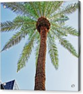 Date Palm In The City Acrylic Print