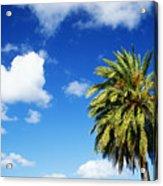 Date Palm Treetop Acrylic Print